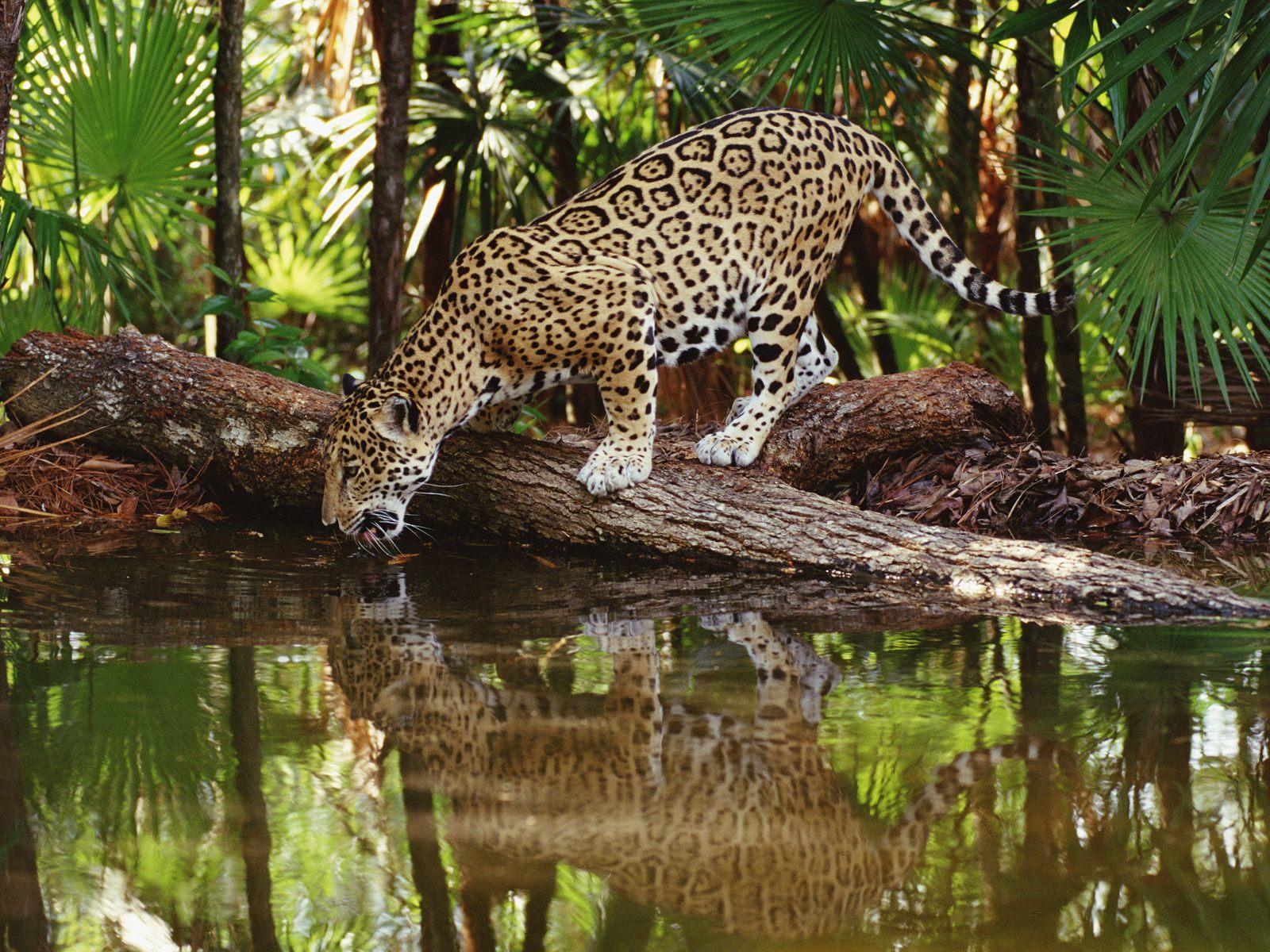 Rainforest Cafe Animal Names